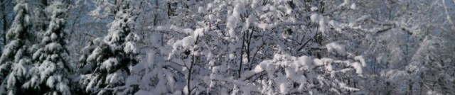 cropped-winter.jpg