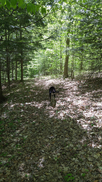 gracie-in-the-woods-2